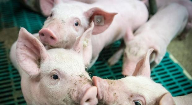 Przeciwdziałanie uciążliwości zapachowej czy blokowanie działalności rolniczej na wsi?