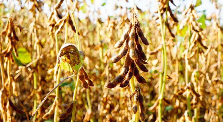 Przegląd odmian soi