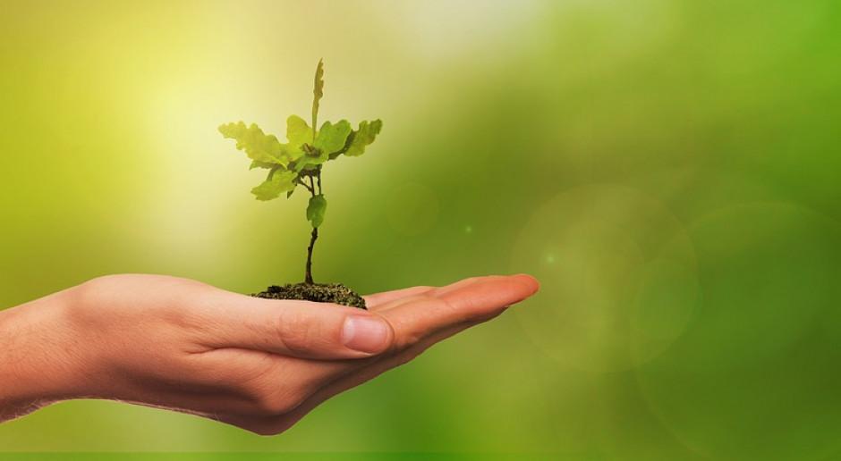 Do 100 proc. kosztów rośnie stawka za założenie uprawy leśnej z PROW