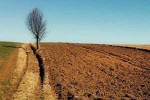 W Polsce rośnie liczba gospodarstw