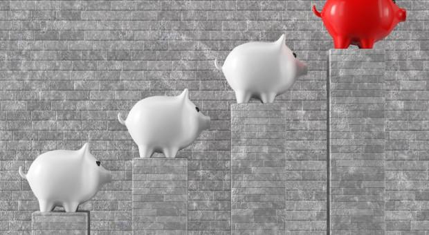 Dynamika wzrostu cen tuczników najwyższa od kilkunastu lat