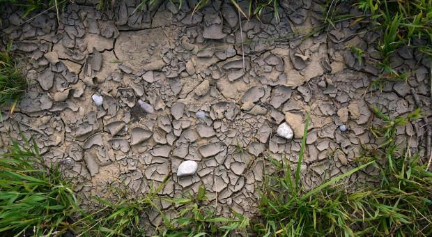 Szwecja i Dania: Strach przed ponowną suszą