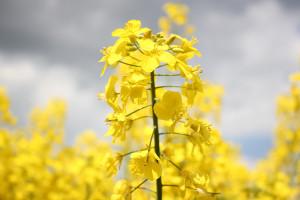 Ardanowski: najbliższe dni zadecydują o wzroście upraw