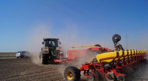 Kukurydza lubi precyzję w siewie
