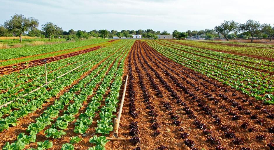 Przejmowanie ziemi zadłużonych gospodarstw nadal możliwe?