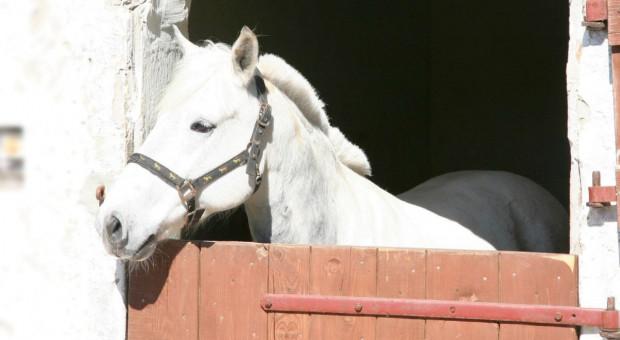 Odzyskano konie skradzione w Niemczech