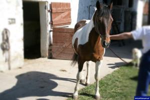 Drugi z odzyskanych koni