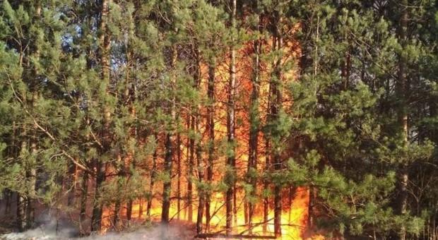 Kontrolowane spalanie gałęzi wymknęło się spod kontroli
