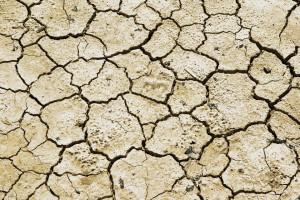 Żniwo suszy: gdzieniegdzie sytuacja jest dramatyczna