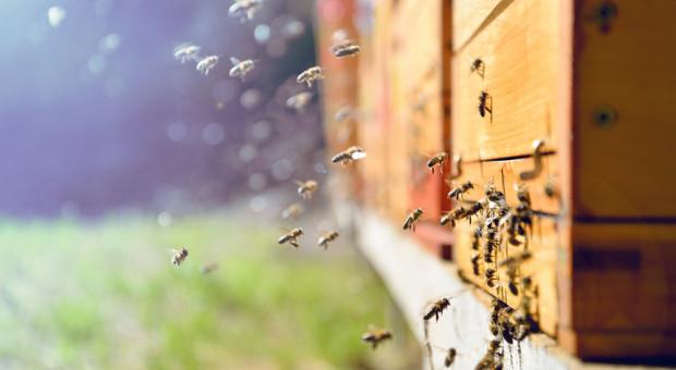 Wsparcie rynku produktów pszczelich - uwaga na zmiany!