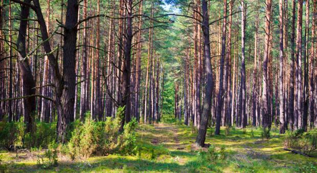 Podlaskie: Zlikwidowano leśną bimbrownię
