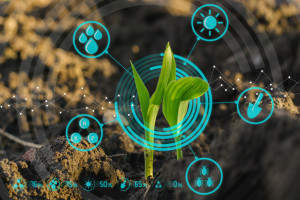 Techniki hodowli roślin a ocieplenie klimatu