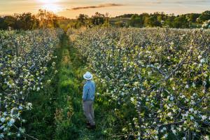 Puda: Ten rok nie ułatwiał pracy sadownikom