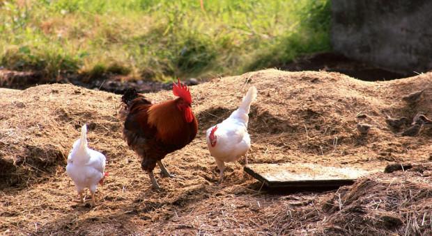 Informacje z ARiMR ułatwią rolnikom sporządzenie planów nawożenia azotem