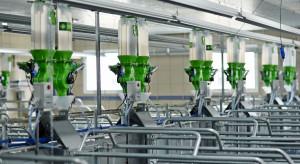 Polnet: Za innowacjami w produkcji świń przemawia ekonomia