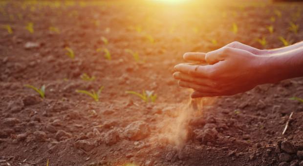 """Brak opadów i niepokój o plony w rolnictwie. """"W Polsce jest tyle wody, ile w pustynnym Egipcie"""""""