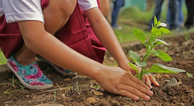 """KE: Program """"Drzewa dla dzieci"""""""
