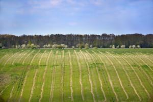 """""""Ośrodki produkcji rolniczej"""" zastąpią PGR-y?"""