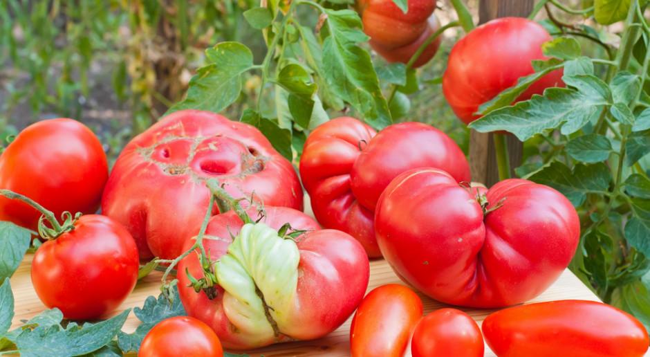 """Handel """"brzydkimi"""" owocami jako walka z marnotrawstwem"""