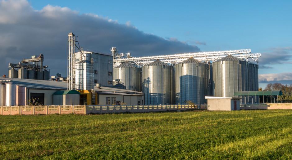 Giełdy krajowe: Podaż zbóż mniejsza, ceny stabilne