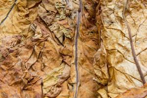 Czy akcyza od wyrobów nowatorskich szkodzi rynkowi tytoniu?