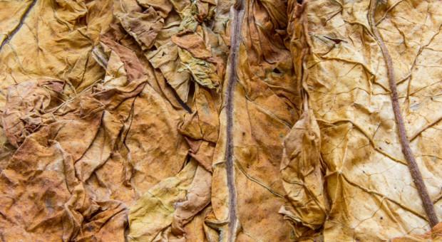 Przemysł tytoniowy: jednorazowa podwyżka akcyzy negatywnie wpłynie na legalny rynek