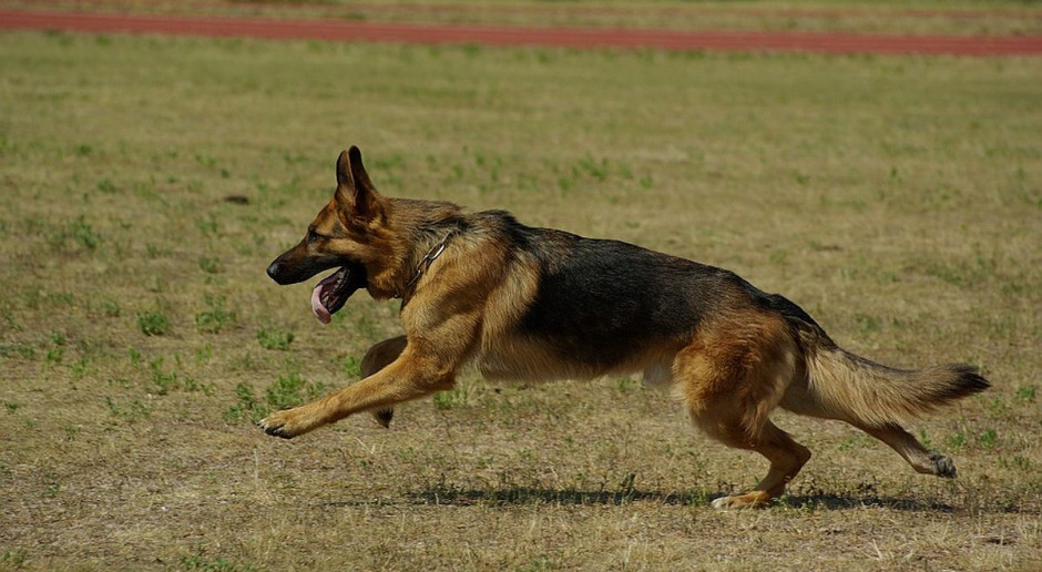 Myśliwy zastrzelił psa, który spacerował z właścicielką