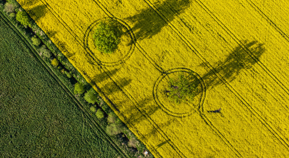 Senacka komisja rolnictwa nie zgłosiła poprawek do ustawy o obrocie ziemią rolną