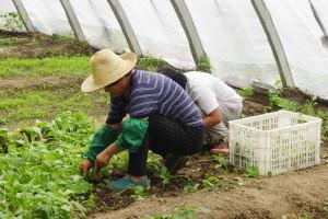 Resort pracy w sprawie usprawnienia procedur sezonowego zatrudniania cudzoziemców