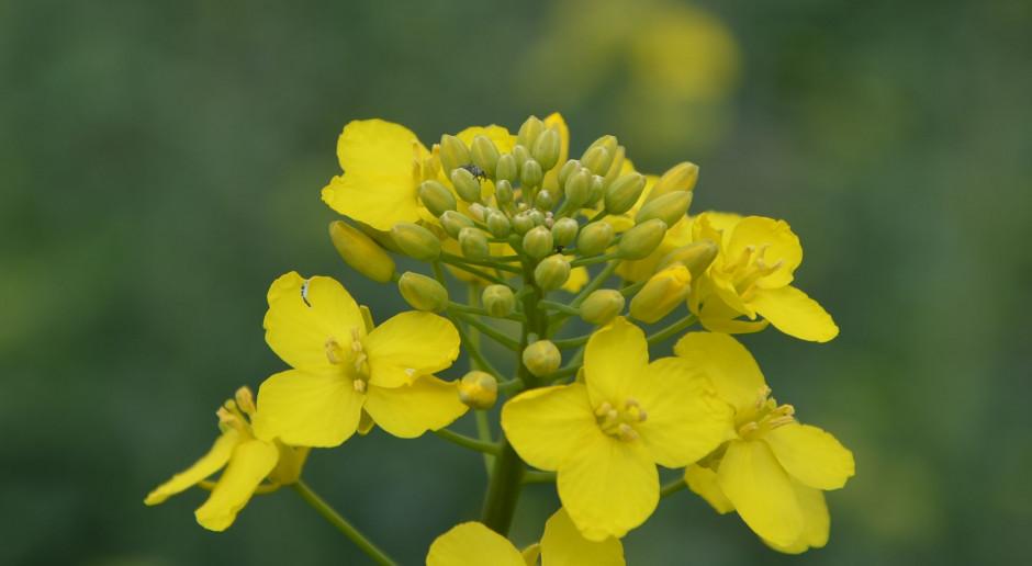 W tym roku indywidualne podejście do ochrony roślin?