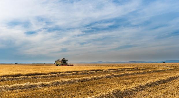 Ukraina: Mniejsze zbiory zbóż w 2019 r.