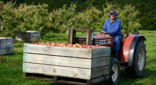 Polscy sadownicy wykańczają czeskich