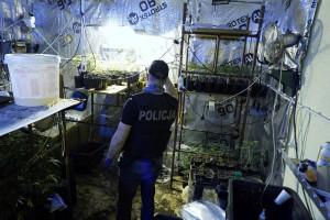 Za szafą w kotłowni ukryta była świetnie profesjonalna plantacja marihuany, zdjęcia: Policja