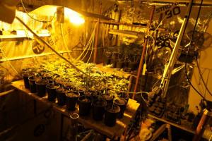 W ukrytych pomieszczeniach znajdowały się rośliny w rożnej fazie wzrostu