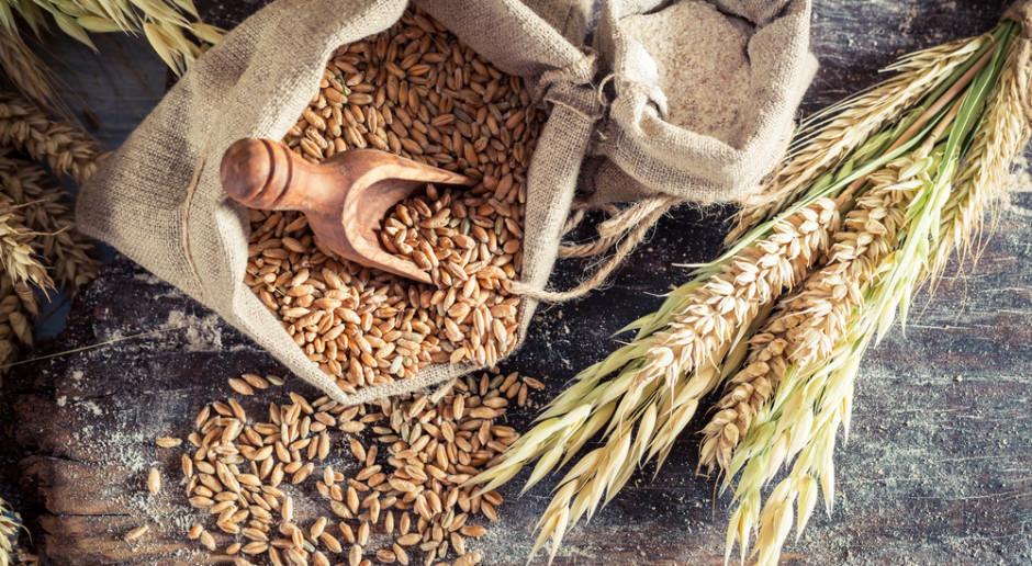FAO: Wzrośnie światowa produkcja zbóż w sezonie 2019/2020