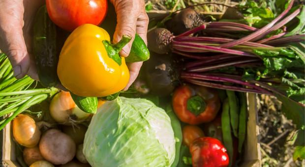 Coraz więcej młodych warzyw na rynku hurtowym w Broniszach