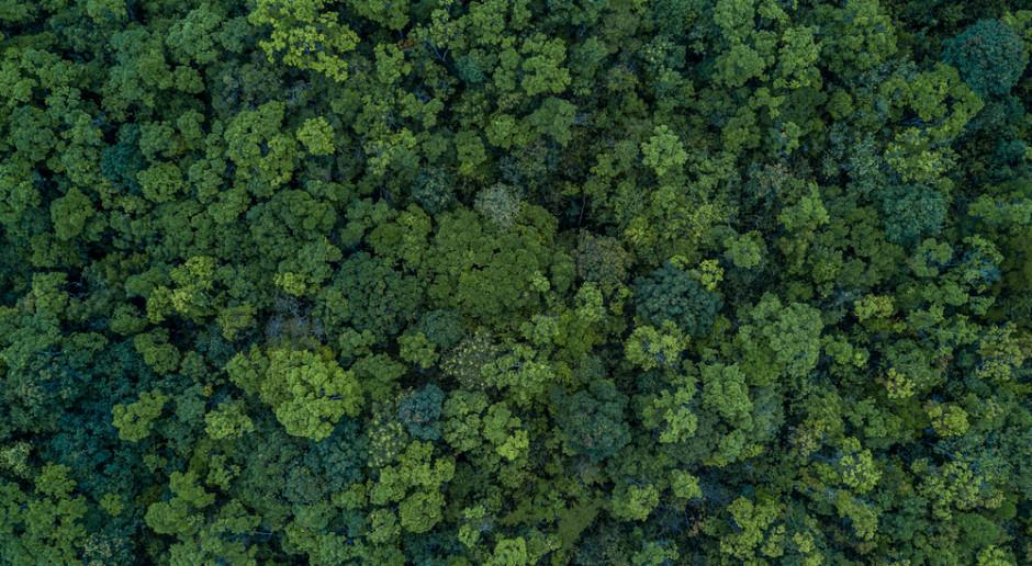Krośnieńska RDLP: dzięki małej retencji więcej wody zostanie w lasach