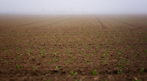 Rosja: Siew roślin jarych przeprowadzono na 25,7 mln ha