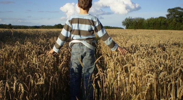 """NIK o """"szansie"""" na wzrost cen ziemi rolnej"""