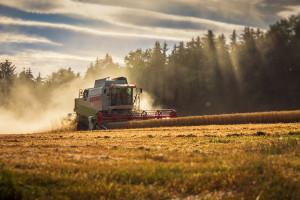 DRV: Deszcz ustabilizował prognozę zbiorów zbóż w Niemczech