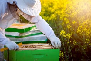 Podkarpackie: zapowiadają się słabe zbiory miodów wiosennych