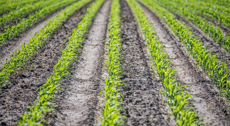 Niemcy: Wstępna prognoza powierzchni uprawy roślin jarych i ozimych