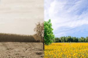 Szacowanie strat po suszy w 2020 roku będzie zdalne