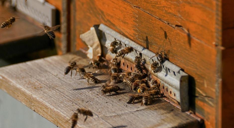 "KE zarejestruje inicjatywę obywatelską ""Save the bees!"""