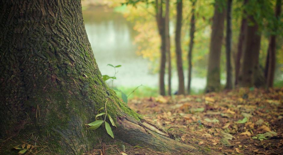 Instytut Badawczy Leśnictwa będzie szkolił nt. wzajemnej zależności lasów i klęsk żywiołowych
