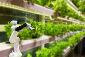 Włoscy badacze pracują nad robotami naśladującymi rośliny