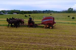 Prasa rolująca sprzężona z końmi, czyli zbiór zielonki u Amiszów