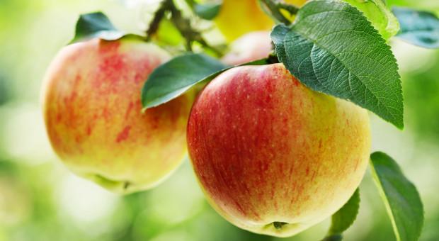 MRiRW: w tym roku ceny skupu jabłek są wyższe niż w ubiegłym
