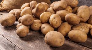 Pięć nowych odmian ziemniaka. Pierwsza o fioletowym miąższu