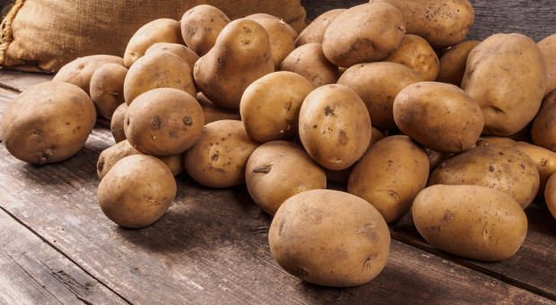 Zbiory ziemniaków mogą być niższe o 11 proc.